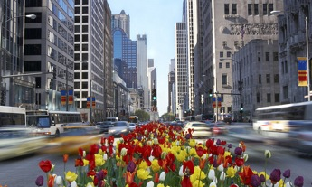 Big City in Springtime