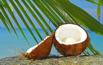 Coconut-and-palm