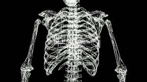 2--1342991-Rotation%20of%203D%20skeleton.ribs,chest,anatomy,human,medical,body,skull,biology,medicine,science,bone,Grid,mesh,sketch,structure,