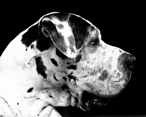 18_1black_and_white_dog_photo